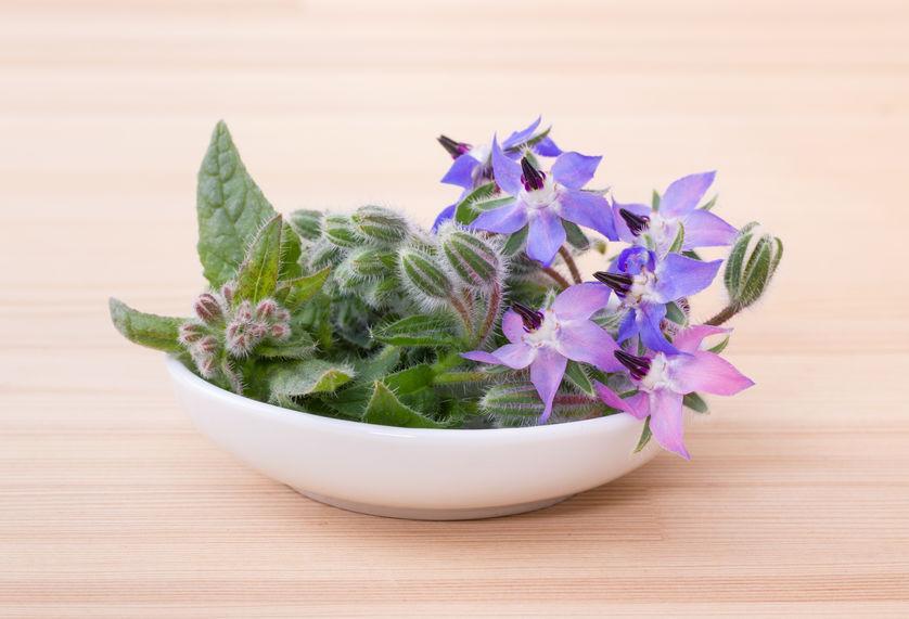 Borragine In Cucina Cure Naturali It