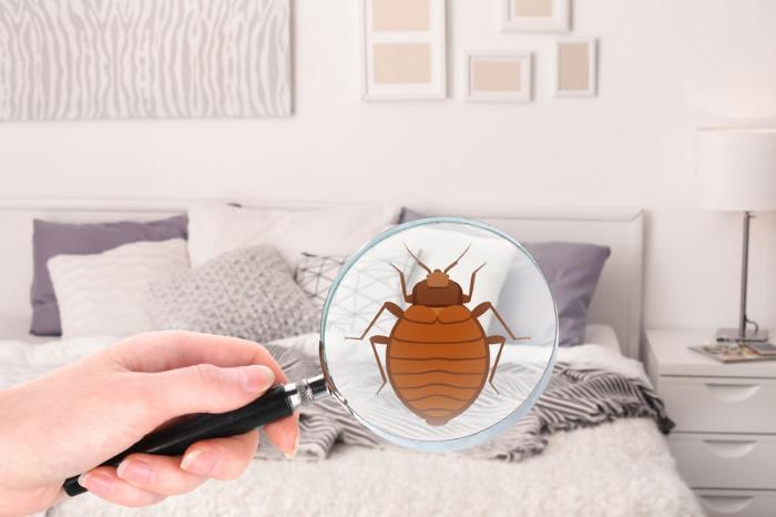 le cimici dei letti possono causare infezioni della pelle